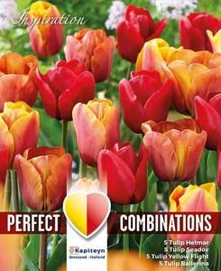 Bilde av Perfect Combinations - Rød, oransje og gul blanding - 20