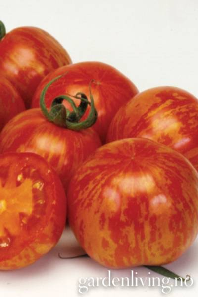 Tomat, Drivhus- 'Red Zebra'