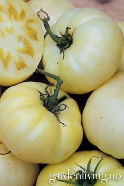 Tomat, Drivhus- 'White Tomesol'