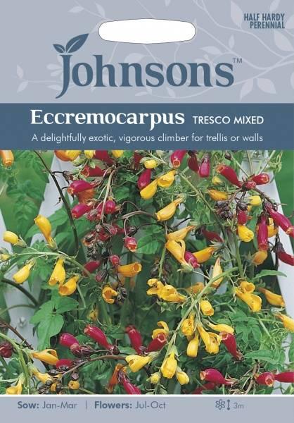 Fakkelranke 'Tresco Mixed' - Eccremocarpus scaber