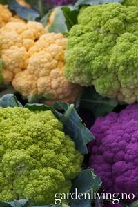 Bilde av Blomkål 'Kaleidoscope Mixed' - Brassica oleracea