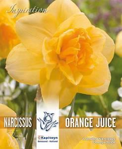 Bilde av Påskelilje 'Orange Juice' - 6 stk