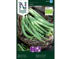 Bilde av Bønne 'Maxi' - Brekkbønne - Organic