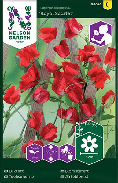 Blomsterert 'Royal Scarlet' - Lathyrus odoratus
