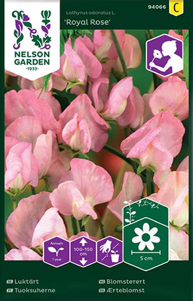 Blomsterert 'Royal Rose' - Lathyrus odoratus