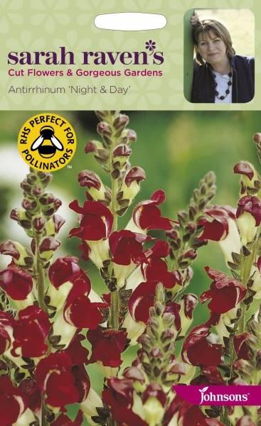 Løvemunn 'Night & Day' - Antirrhinum majus
