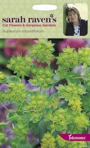 Bilde av Hareøre - Bupleurum rotundifolium