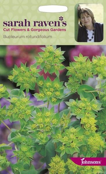 Hareøre - Bupleurum rotundifolium