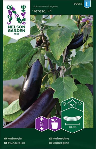 Aubergine 'Teresa' F1 - Solanum melongena