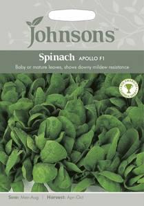 Bilde av Spinat 'Apollo' F1 - Spinacia oleracea