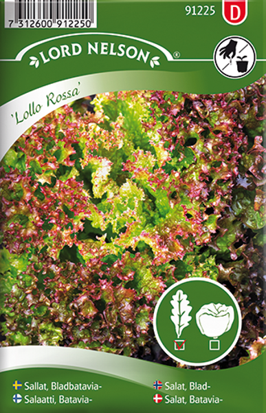 Salat, Lollo- 'Lollo Rossa' - Lactuca