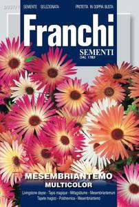Bilde av Middagsblomst 'Multicolor' - Mesembryanthemum criniflorum