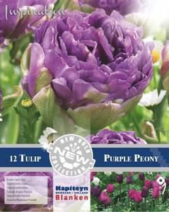 Bilde av Tulipan 'Purple Peony', Sen dobbel - 12 stk