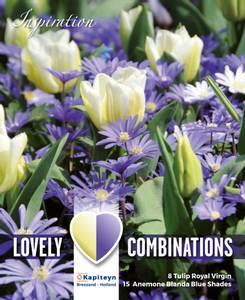 Bilde av Perfect combinations - Tulipaner og balkansymre - 23 løk