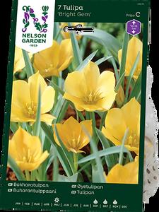 Bilde av Lintulipan 'Bright Gem' - Tulipa linifolia syn. batalinii -