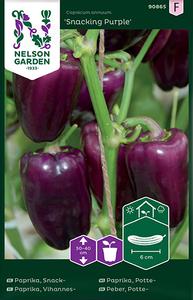 Bilde av Paprika 'Snacking Purple' - Capsicum annuum