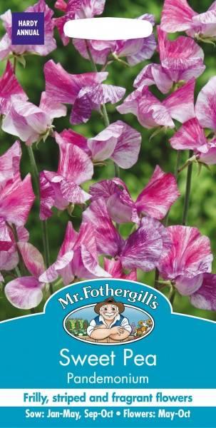 Blomsterert 'Pandemonium' - Lathyrus odoratus