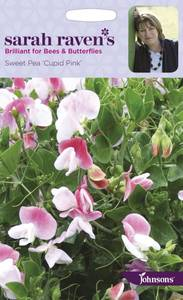 Bilde av Blomsterert 'Cupid Pink' - Lathyrus odoratus