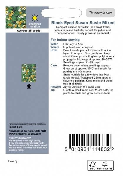 Vingethunbergia 'Susie Mixed' - Thunbergia alata