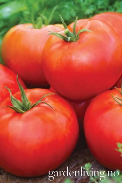 Tomat, Frilands- 'Big Daddy Hybrid'