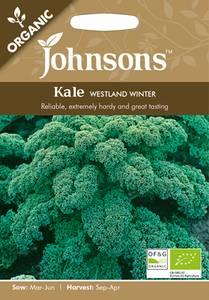 Bilde av Grønnkål 'Westland Winter' - Brassica oleracea - Organic