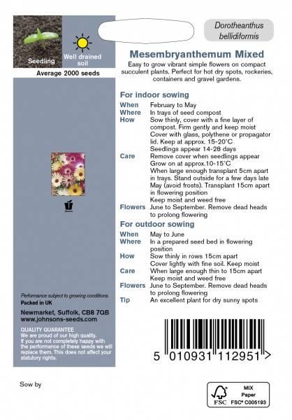 Middagsblomst 'Livingstone Daisy Mixed' - Mesembryanthemum crini