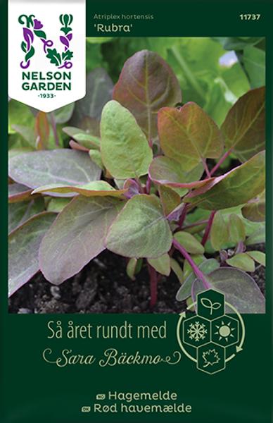 Hagemelde 'Rubra' - Atriplex hortensis