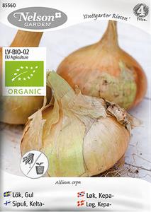 Bilde av Kepaløk 'Stuttgarter Riesen' - Allium cepa, Organic