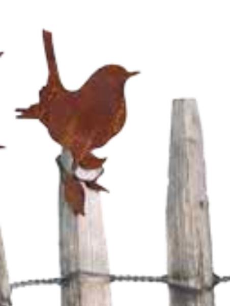 Hagefugl, rust – fuglekonge